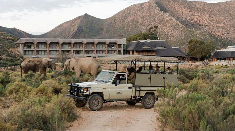 safari perto da cidade do cabo 3